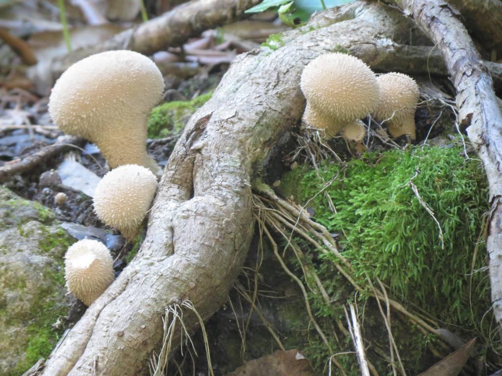 funghi montagna ganzaria pro loco sammichelese loveitaliafun