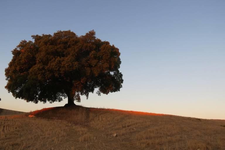 quercia montagna ganzaria pro loco sammichelese loveitaliafun